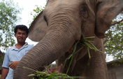 Provide Emergency Care for Lucky the Elephant