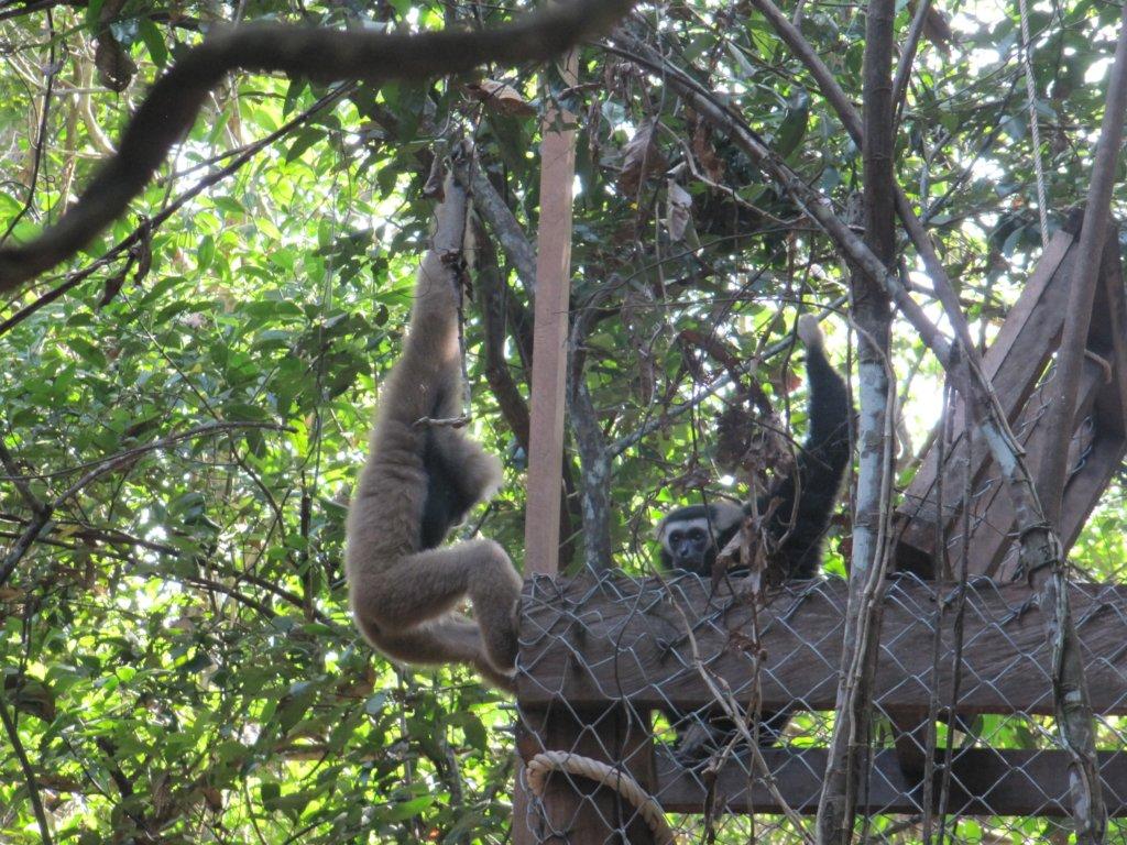 Help Bring Wildlife Back to Angkor Forest