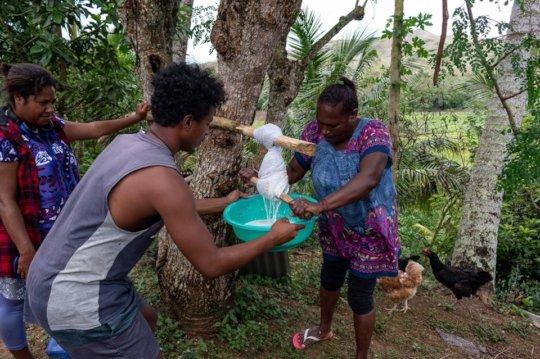 Grace Extracting Virgin Coconut Oil
