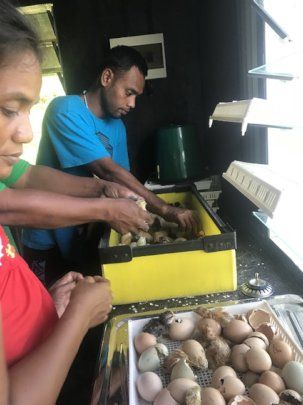 Seeta and Ata-ata working in the hatchery