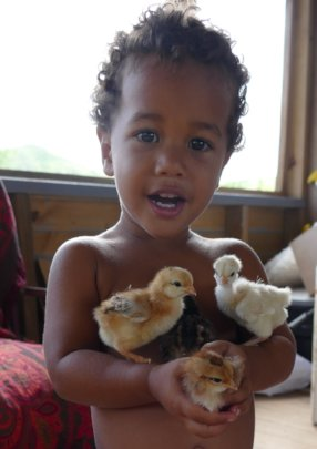 Happy Chickens for Food Security and Environment