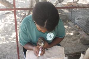 Pretty feeding a baby dassie