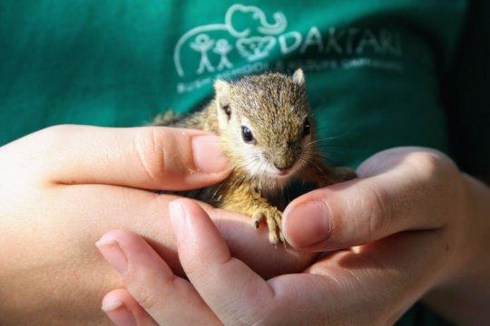 Joe, baby squirrel