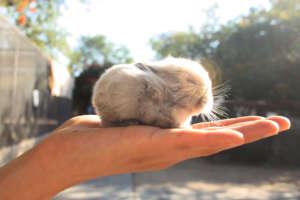 Baby Bunny at DAKTARI