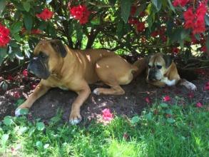 Tyson with his new sister NWBR Alum Abby