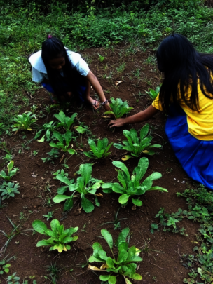 Rural school garden at Mukammali ES
