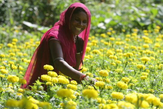 Increase Profits for 3,500 Poor Farmers In India