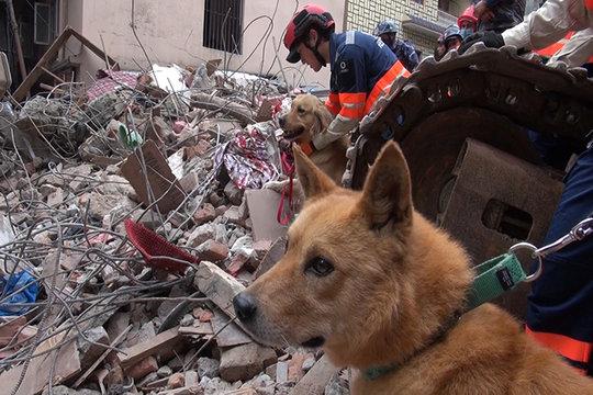 Yumenosuke searching through the rubble