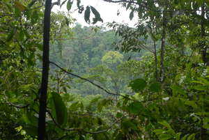 Part of our protected forest