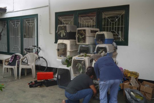 The animals confined to kennels for moving them