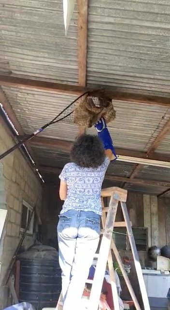 Trying to rescue a sloth from a house
