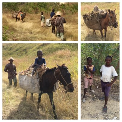 Create jobs for 100 Haitians in Thomonde