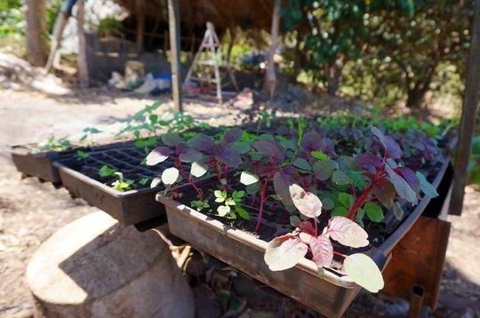 Natural medicines in Nicaragua