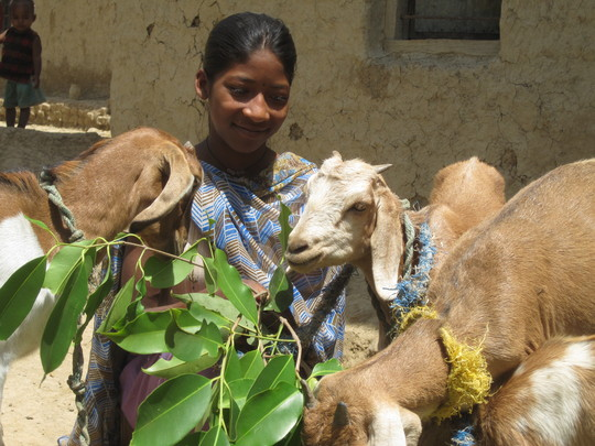 Kabita with some of their goats