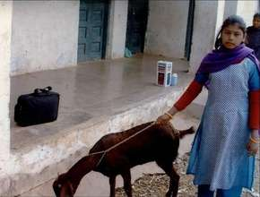 Young Girl with Goat = The Answer to a Lifetime of