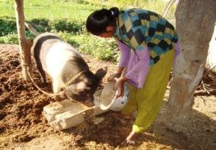 A co-op member took out a loan for pig farming