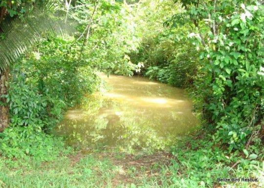 Roaring Creek swollen and dirty