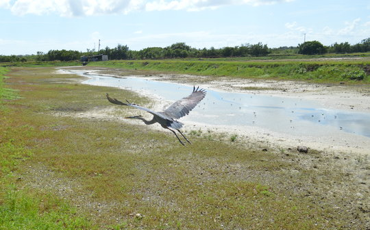 Released Heron