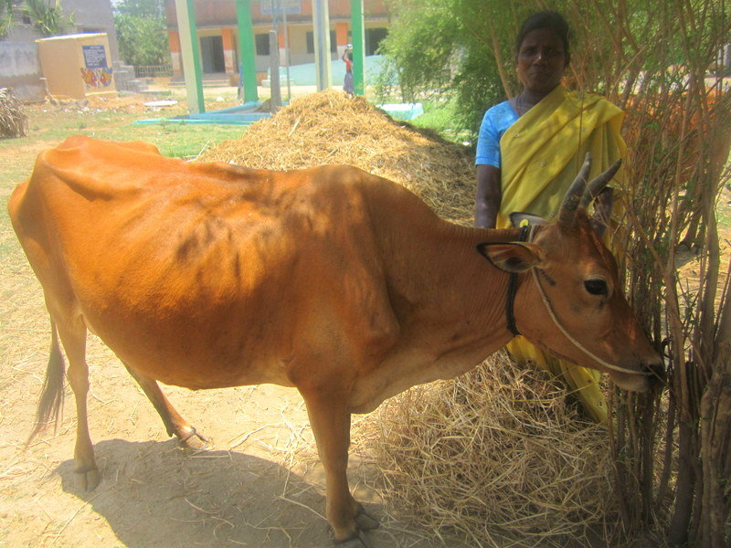 Empower 40 Dalit mothers with a micro-finance loan