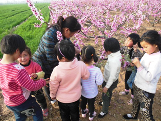 Ms. Sun guides students in the peach orchard.