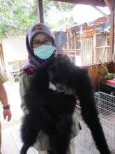 SRI biologist Indi giving mungki a checkup