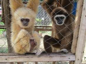 Luna and Manta at the Wildlife Transit Center