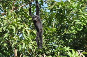 Tom enjoying the SRI office mango tree
