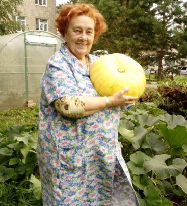 Rzhev: pumpkin from the green house