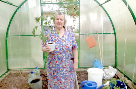 New greenhouse in Rzhev