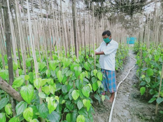 Cultivation with functions for next cropping.