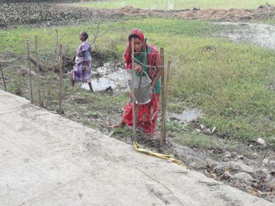 Planting Mangroves - Sundari- as Social Forestry