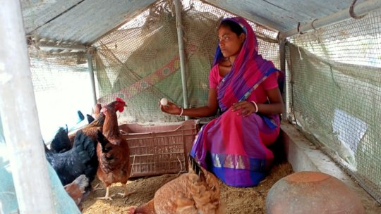 Poultry- collective efforts to bring smile back