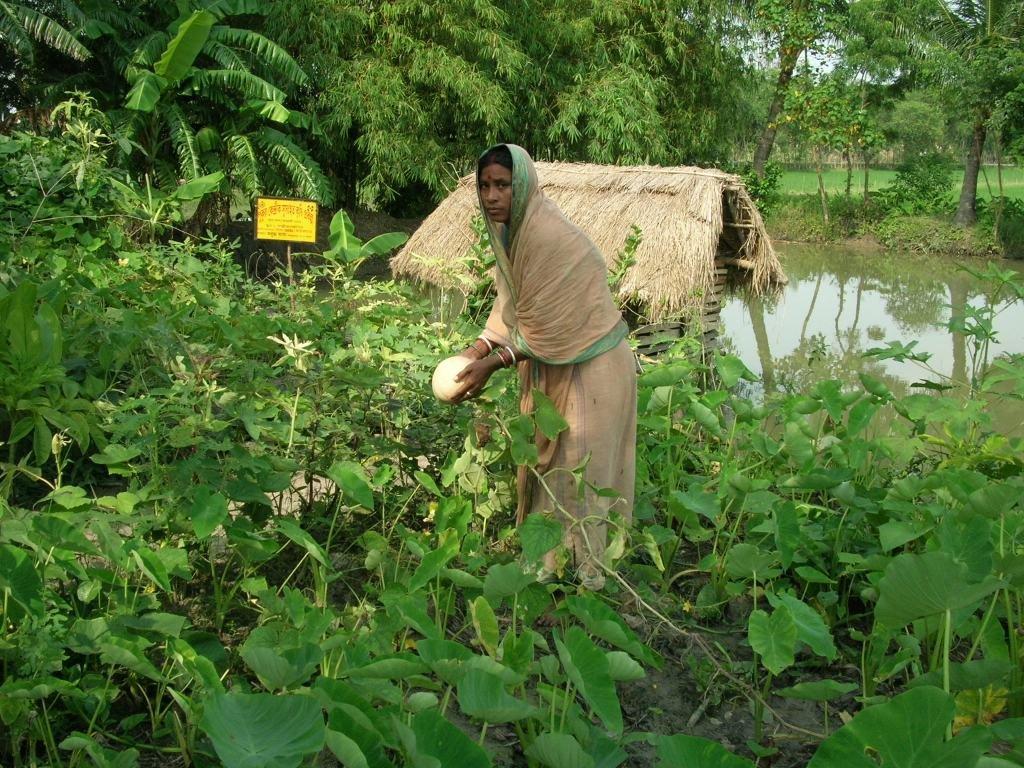 Community health Programme in Sundarban