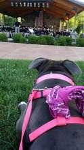 Diseno at the park