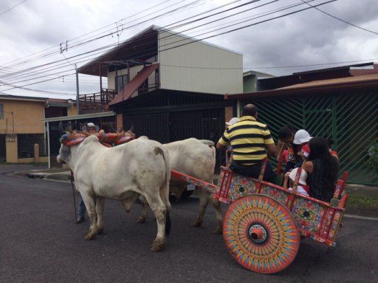 Riding the traditional oxcart around the community