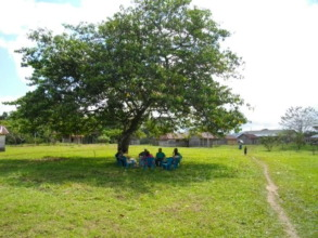 The tree where students studied