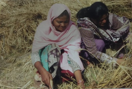 Women during harvestiing