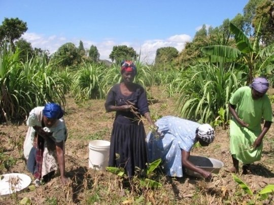 Help Haitians Grow Food Themselves