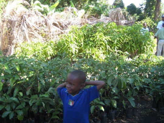 The hope is in new plant growing across Haiti