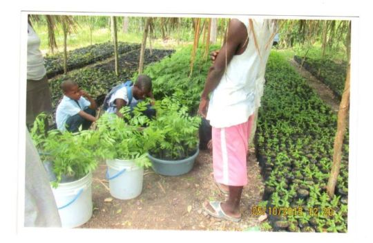 community involved in planting trees