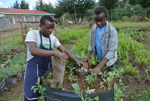 Students weeding the multistorey garden