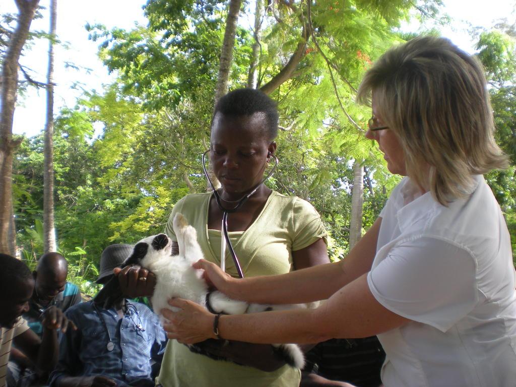 Vet volunteer and Haitian rabbit producer