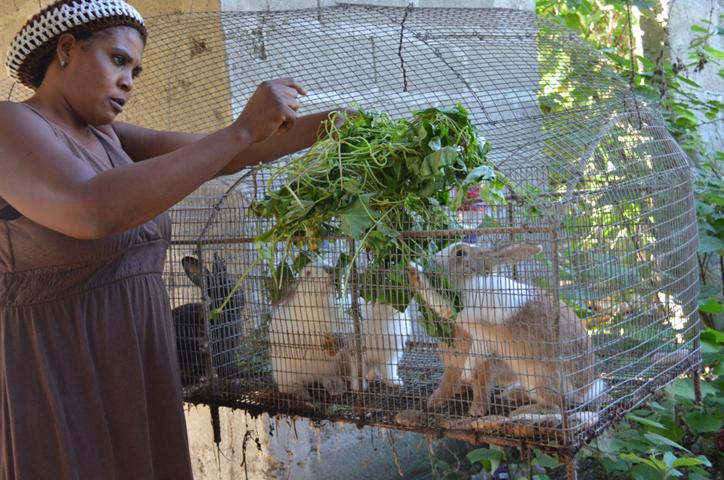 Newly trained rabbit producer feeding her rabbits.