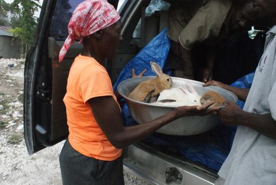 Distributing rabbits