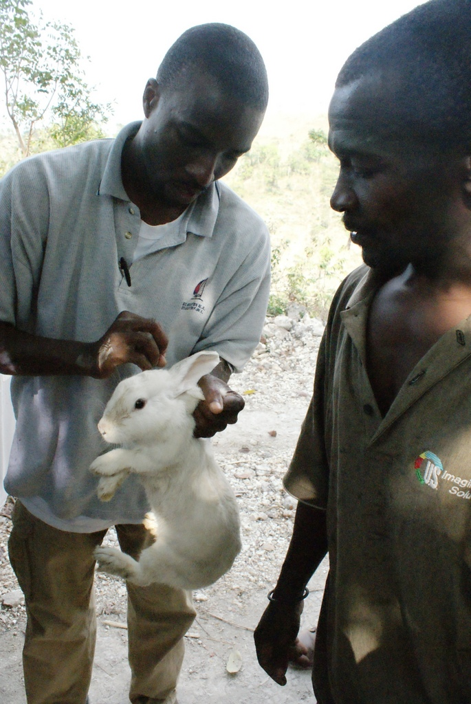 Inspecting one of the rabbits being distributed