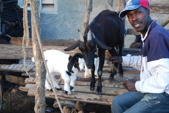 A mother goat and babies - training is provided on reproduction.