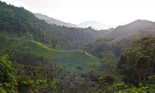 Chiapas cloud forest