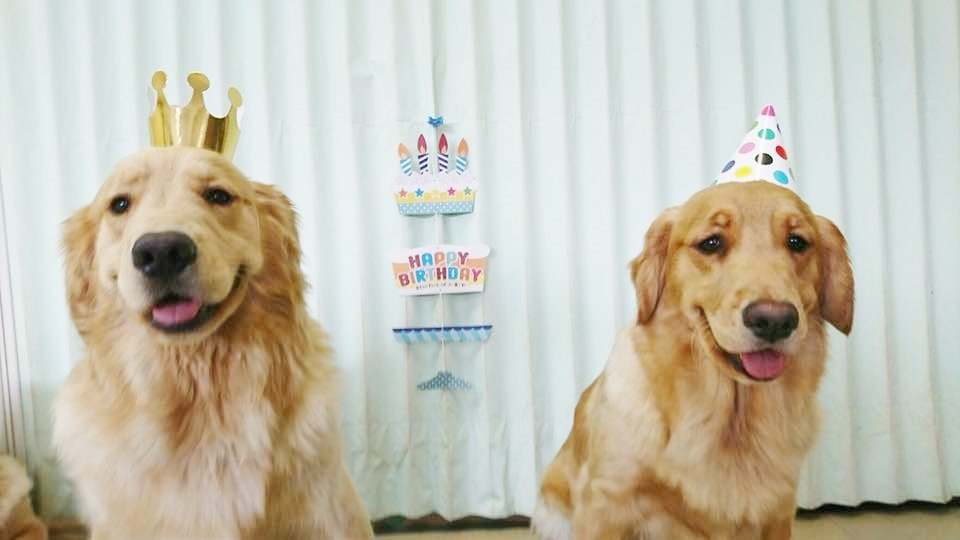 Happy Birthday to Puppies!