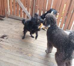 Playing with the other dogs