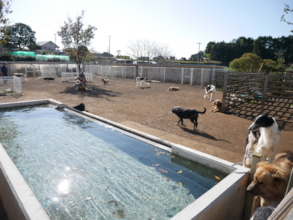 For Summer season, There is a pool for dogs.